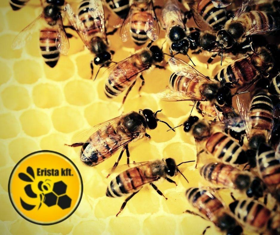 Erista méhész webáruház, varroa atka elleni szerek