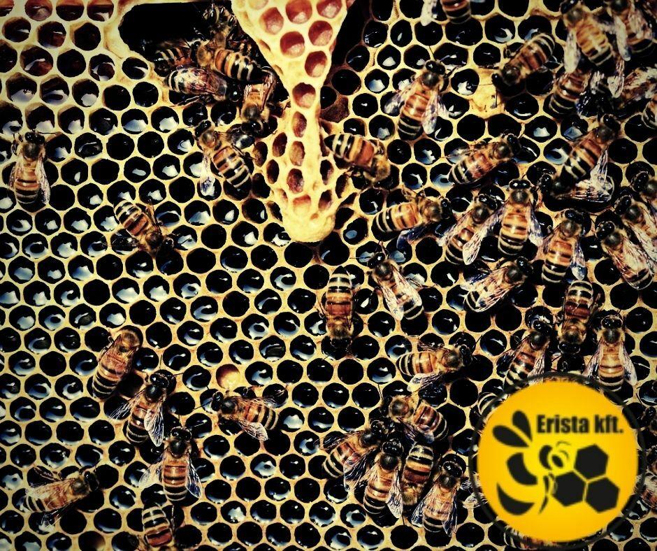 Mi az a varroa atka? Varroa atka története.
