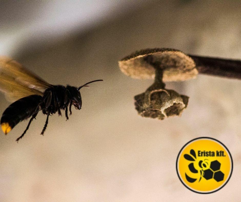 anyanevelés, méhészbolt
