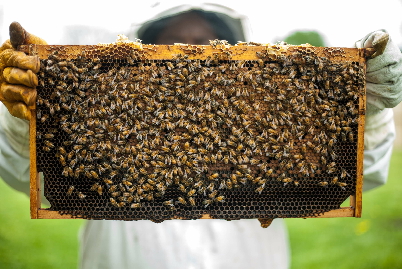 nozéma kezelése az egészséges méhészetért