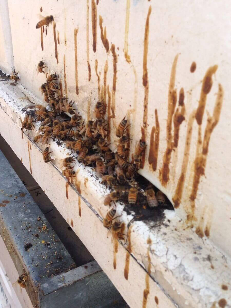 A nozéma méhbetegség tünetei