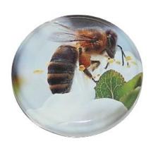 T082 tető kék méhecske